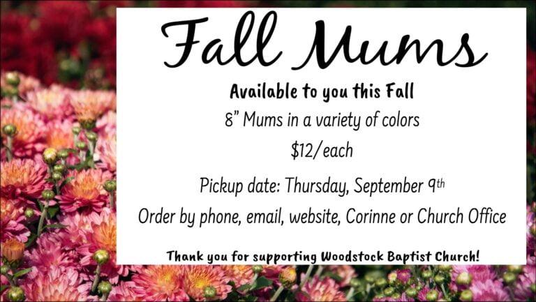 Fall Mums